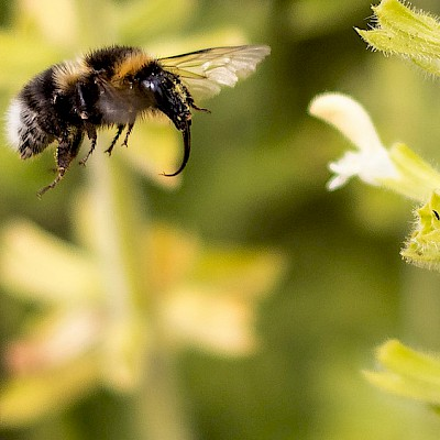 bumblebee-with-trunk.jpg