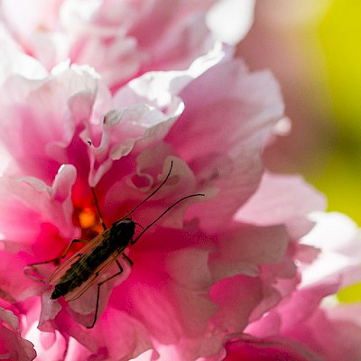 insect-on-petal.jpg