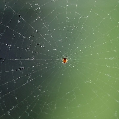 spider-in-the-web.jpg